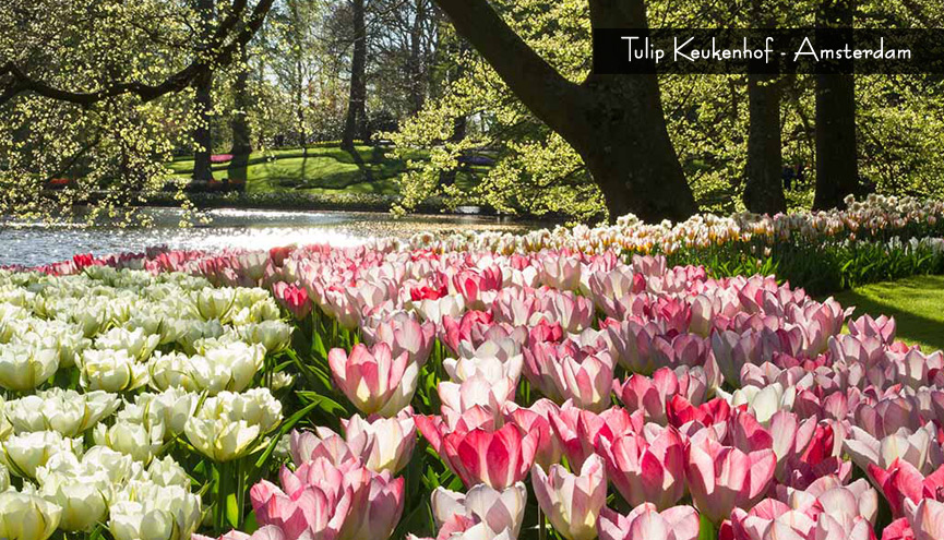 EUROPE WOW SAVER + KEUKENHOF 07H  Belanda - Belgia - Perancis DEP DATE : 26 MAR, 23 APR 2017 BY : TURKISH AIRLINES