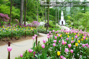AE5GA - KOREA JEJU CHERRY BLOSSOM with THE GARDEN OF MORNING CALM SAVER 07H/05M - 2020: MAR 25, 27, 29 & 31 // APR 04, 06 & 08 BY: GA