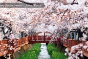 KOREA SPRING SONATA  5D Dep 2017 : 26, 27 Mar & 14 Apr By Garuda Indonesia
